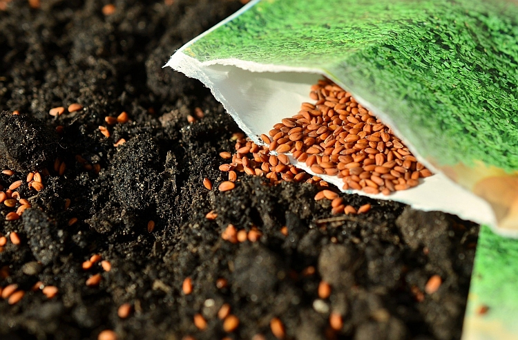 Seeds being sown from a packet on to bare earth