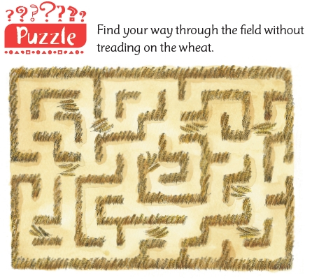 A maze puzzle through a field of wheat