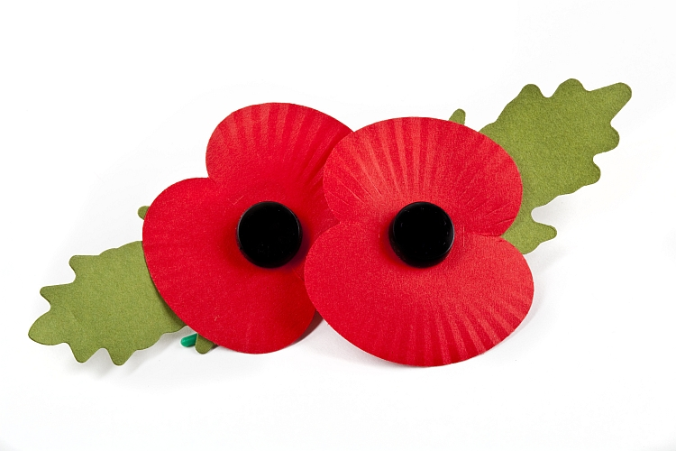 Two poppies against a white background
